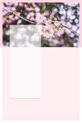 twenty four solar terms poster spring equinox poster spring solar poster , Pink, Spring Equinox Poster, Spring Is Coming ภาพพื้นหลัง