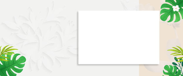 सफेद फूल साहित्यिक पृष्ठभूमि न्यूनतम पृष्ठभूमि महिलाओं के कपड़े, घर, दुकान पृष्ठभूमि, सफेद पृष्ठभूमि छवि