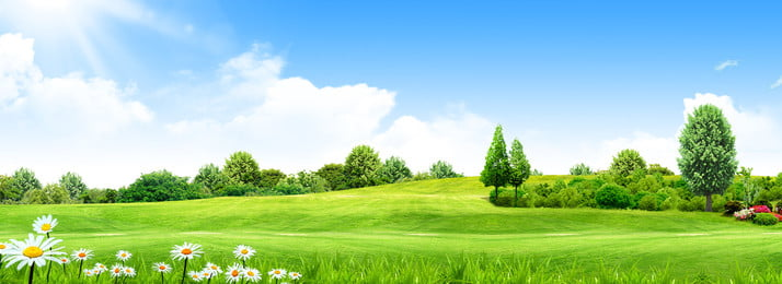 segar hijau padang rumput bunga liar, Bunga Liar, Awan Putih, Tanah Hijau imej latar belakang