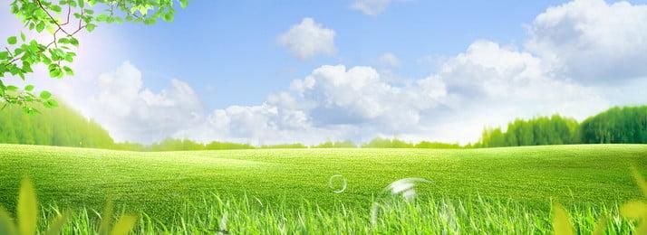 fresh green grassland blue sky background, Big Tree, Blue Sky, Ecological Imagem de fundo