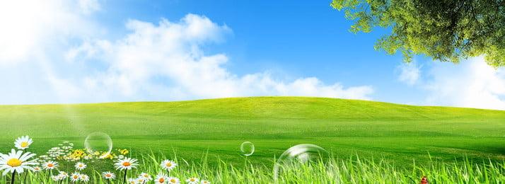 fresh green grassland wildflower, Greenland, Green Ecology, Wildflower Imagem de fundo