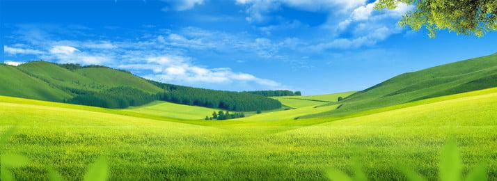 fresh green grassland blue sky background, Sky, Grassland, Blue Sky Imagem de fundo