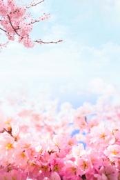 peach blossom peach blossom festival spring spring , Fresh, Blossom, Peach Blossom Festival ภาพพื้นหลัง