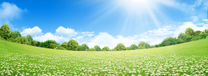 small fresh green lawn small flowers background, Small Fresh, Green, Park Background image