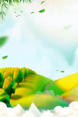 夏日 初夏 夏季 夏天 夏季 美景 綠植背景圖庫
