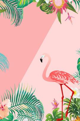 flamingo promotion pink contrast , Pink, Freshness, Promotion Фоновый рисунок