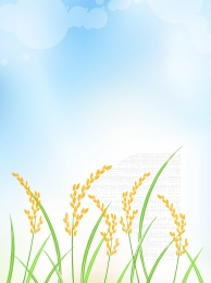 agriculture agricultural product rice field background , Agricultural, Agricultural Product, Rice Field Фоновый рисунок