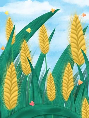 पृष्ठभूमि सामग्री छोटे पूर्ण गला घोंटना गेहूं के कान पौधे , सार्वभौमिक पृष्ठभूमि, पौधे, परिदृश्य पृष्ठभूमि छवि
