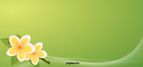 a primavera flores green background, Flor, Flores Brancas, Green Imagem de fundo