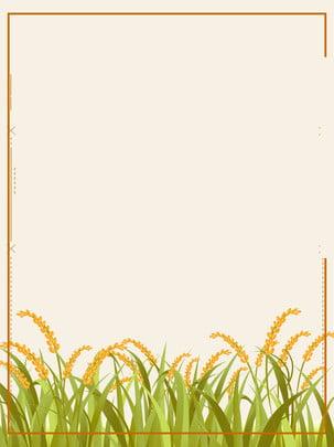 グリーンバック麦畑 , 緑, 麦畑, 背景 背景画像
