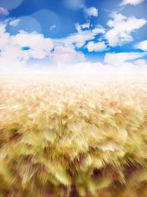 hoàng hôn trên bầu trời , Đám Mây, Ánh Nắng Mặt Trời., 花海 Ảnh nền