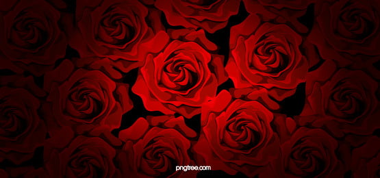 Closeup Of Red Rose Petals, Red, Rose, Happy Valentines Day, Background image