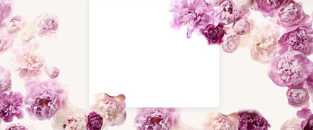 bunga bunga indah latar belakang kosmetik wanita biasa, Indah, Segar, Mawar Putih imej latar belakang