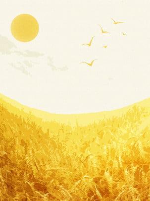 Lúa mì  cây trồng trường Vùng Nông Thôn Hình Nền