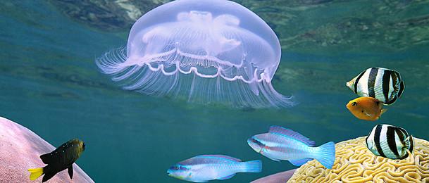 coelenterate беспозвоночных  море океан, животное, медузы, тропические Фоновый рисунок