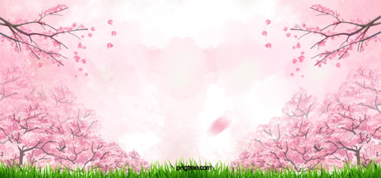 cherry blossom pink background, Cherry, Blossoms, Pink Background image