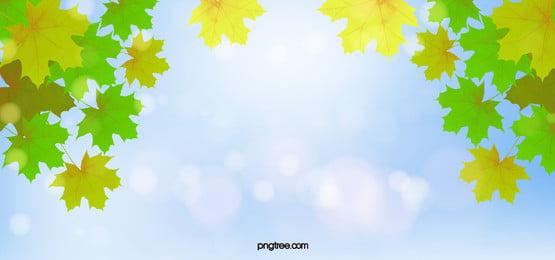 वसंत ऋतु मेपल, वसंत ऋतु मेपल, हरी मेपल का पत्ता, वेक्टर पृष्ठभूमि पृष्ठभूमि छवि
