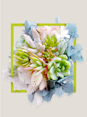 深緑植物多肉植物の背景 , 深緑植物多肉植物の背景, 海报バナー, 撮影 背景画像