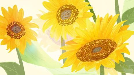 सूरजमुखी पृष्ठभूमि, सूरजमुखी, पीले, कल्पना पृष्ठभूमि छवि
