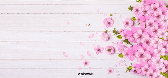 pink flowers background, Pink, Petal, Board Background image