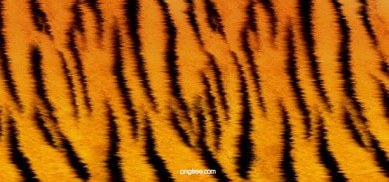 hổ mèo vải mèo nền, Trúc, Động Vật Hoang Dã., Chế độ Ảnh nền