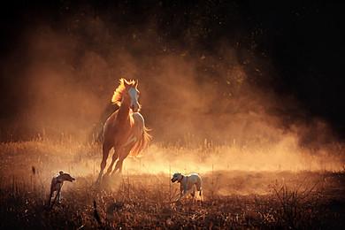 cavalo  camelo rancho fundo de campo, Grass, Pasto, Rural Imagem de fundo