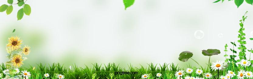 на местах луг завод трава справочная информация, херб, летом, солнце Фоновый рисунок