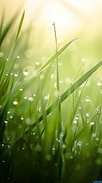草本植物生長背景, 花園, 場, 環境 背景圖片
