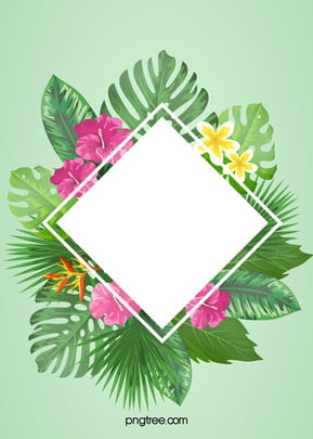 hoa  khung hoa holly  nền , Trang Trí., Thiết Kế., Cây Ảnh nền