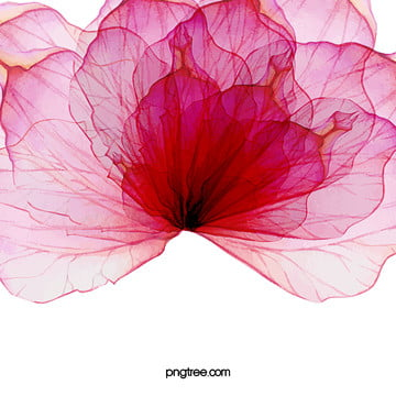 aquarela cor   de   rosa arte design background , Floral, Flor, Curva Imagem de fundo
