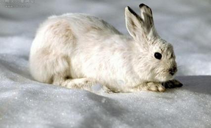 bunny bunny, Dễ Thương., Lông, Thú Cưng. Ảnh nền