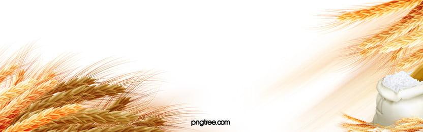beras gandum banner latar belakang, Paddy, Beras, Gandum imej latar belakang