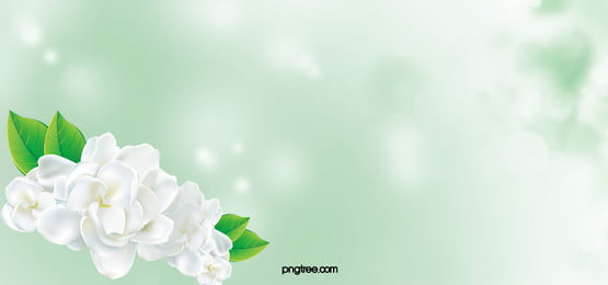 fresh jasmine beauty poster background elements, Jasmine, Beauty, Poster Background image