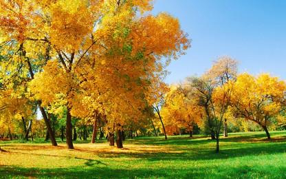 樹木木本植物秋季維管植物 跌倒 公園 森林背景圖庫