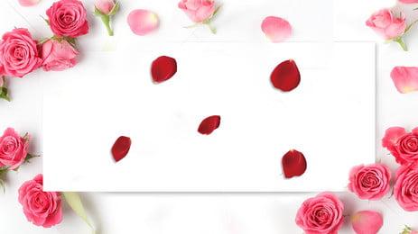 फैशन गुलाबी गुलाब पंख पृष्ठभूमि, गुलाब, गुलाब, फूल पृष्ठभूमि छवि