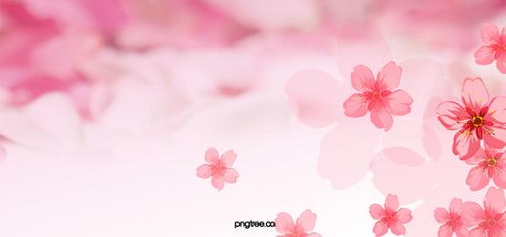 浪漫粉色樱花 راية, رومانسية, وردي, إزهار الكرز صور الخلفية