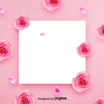 Pink Beautiful Rose Valentines Day 38 Womens Day Background , Background Of March 8th Womens Day, Aestheticism, Female Sex Background image