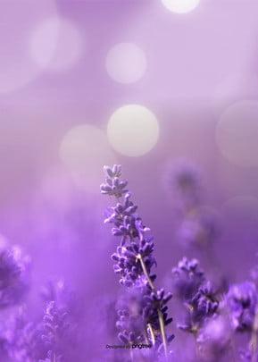 estética lavender background design , A Estética, Pequeno Fresco, Background Imagem de fundo