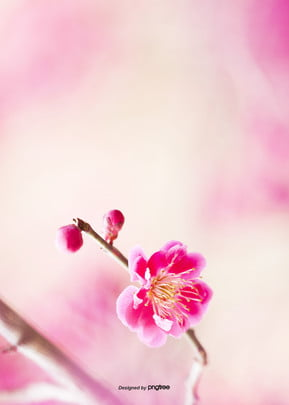 pink flowers and tree branches background , Aestheticism, Soft Pale, Branch Background image