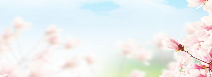 latar belakang spanduk bunga segar dan elegan segar elegant bunga banner latar belakang musim panas mudah langit, Latar Belakang Spanduk Bunga Segar Dan Elegan, Panas, Mudah imej latar belakang