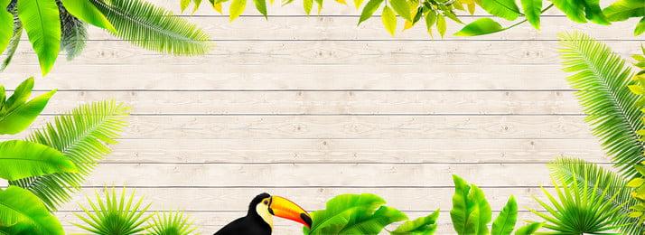 ग्रीष्मकालीन वर्षावन नारियल का पेड़ हरा, तोता, लकड़ी की बनावट, बैनर पृष्ठभूमि छवि