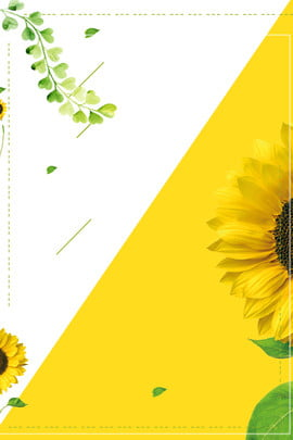 秋季文藝向日葵撞色廣告背景 秋季 文藝 向日葵 撞色 廣告 背景 秋季 文藝 向日葵 撞色 廣告 背景 , 秋季, 文藝, 向日葵 背景圖片