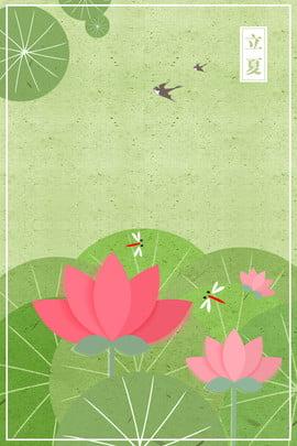 夏天夏天開始24節氣蓮 , 蓮花, 荷葉, 綠色 背景圖片