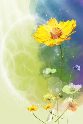 Nền màu nước tươi Cúc H5 Hoa màu nước Độ dốc Tươi Quảng Nước Độ Cúc Hình Nền