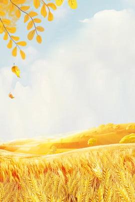 fundo de outono sintético criativo outono folhas caídas cloud setembro trigo colheita caricatura simples síntese , Caídas, Cloud, Setembro Imagem de fundo