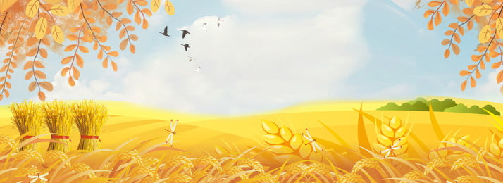 fall wheat yellow leaves september, Wheat, Harvest, Cartoon Background image