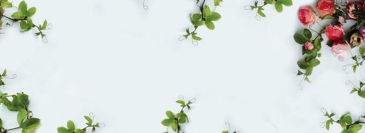 ताजा फूल हरी पत्ती बैनर पृष्ठभूमि ताज़ा फूल हरी पत्ती बैनर पृष्ठभूमि रोमांटिक गुलाब पत्ती वेलेंटाइन का ताज़ा फूल हरी पृष्ठभूमि छवि