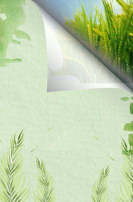 망고 녹색 쌀 필드 찢어진 종이 광고 배경 망고 종 녹색 라이스 필드 찢어짐 종이 광고 배경 녹색 , 종, 녹색, 라이스 배경 이미지