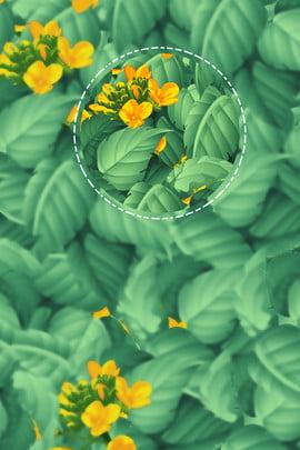 녹색 식물 신선한 여름 포스터 식물 포스터 상쾌한 여름 , 포스터, 상쾌한, 녹색 식물 신선한 여름 포스터 배경 이미지