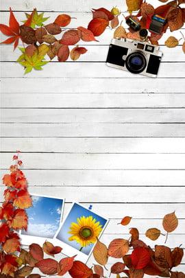 सरल शरद ऋतु पोस्टर सरल मेपल का पत्ता पतित , पत्ता, पतित, बोर्ड पृष्ठभूमि छवि